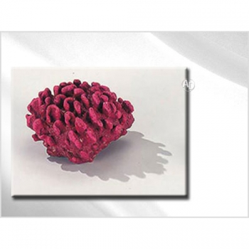 Decor Koralle Mustard Coral 13cm rot